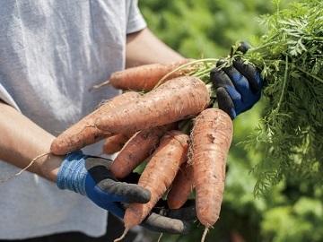 農業生産法人株式会社フォレストファーム-top
