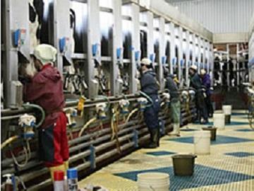 有限会社日本酪農清水町協同農場-5