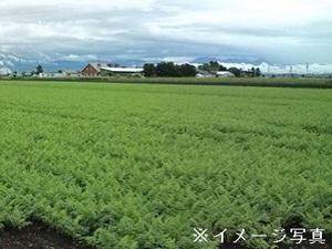 郡上市×露地野菜/法人【32729】-top