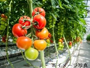 姫路市×野菜/法人【32735】-top