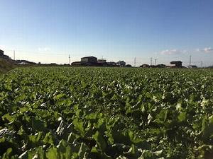 農家になりたい人は要チェック!重要な3つの適性を紹介