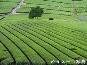 牧之原市×お茶/法人【32739】-top