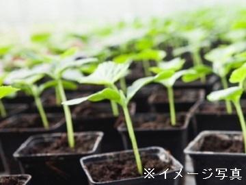 津市×花・種苗/法人【32778】-1