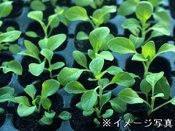 津市×花・種苗/法人【32778】-4