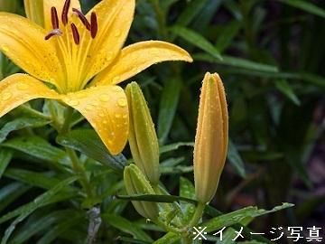 東海市×花/法人【32775】-2
