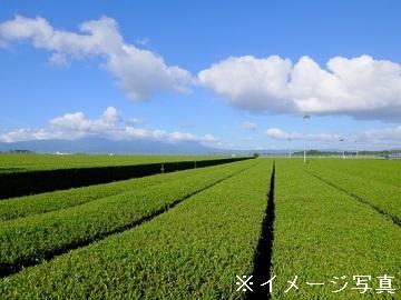 牧之原市×お茶/法人【32779】-top
