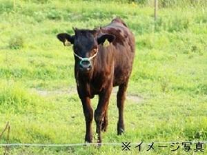 曽於市×肉牛/法人【32789】-top