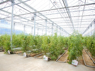 株式会社井出トマト農園-2