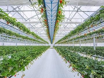 株式会社淡路の島菜園-1