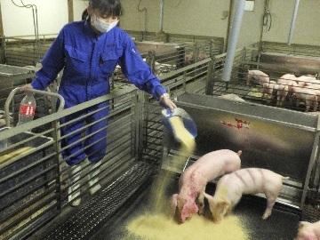 赤地養豚株式会社-2