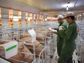赤地養豚株式会社-4