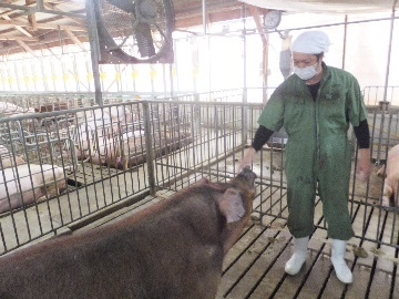 赤地養豚株式会社-6