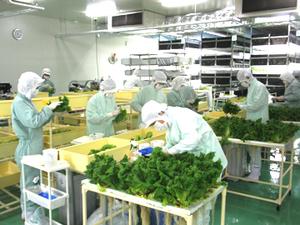 株式会社野菜工房-top