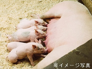 川俣町×養豚/法人【32854】-2