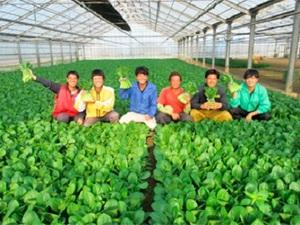 有限会社若谷農園-top