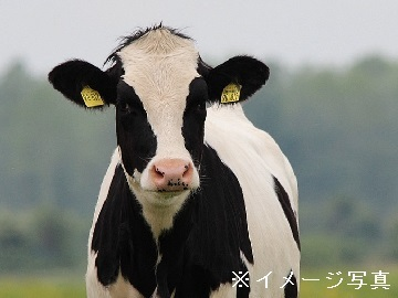 全国農業協同組合連合会長野県本部 三岳牧場-top