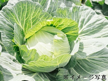 八千代町×野菜/個人【32890】-top