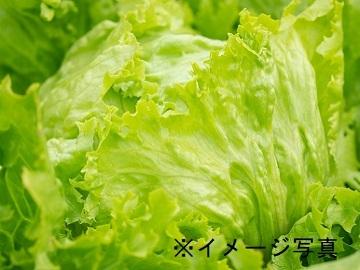坂東市×野菜/個人【32891】-1