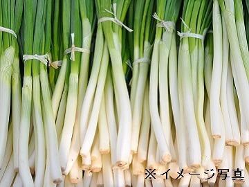 坂東市×野菜/個人【32891】-2
