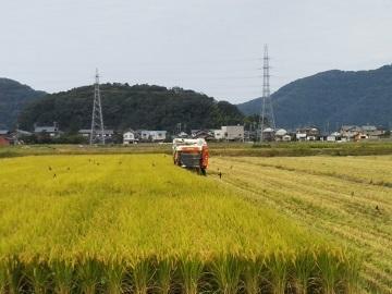 鯖江市×野菜/個人【32908】-top