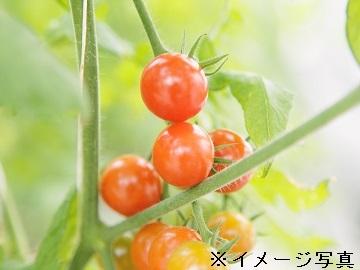 岐阜県・長野県・三重県×施設野菜/法人【32910】-top