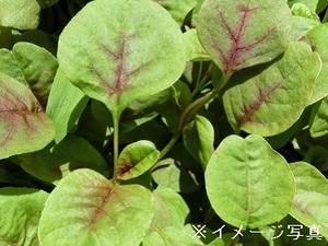 つくば市×野菜/法人【32915】-top