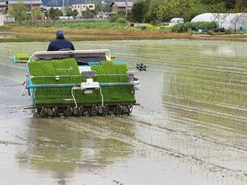 株式会社澤農園-3