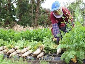 北海道・鹿児島×農園/法人【32955】-top