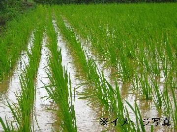 明和町×稲作/法人【32965】-top