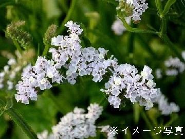 四日市市×種苗/法人【32961】-top