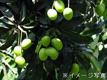 多度津町×野菜・果樹/法人【32967】-top