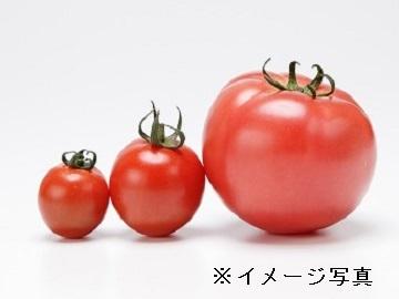 勝央町×酪農/個人【32975】-1