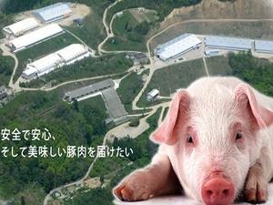 石井町×養豚/法人【32983】