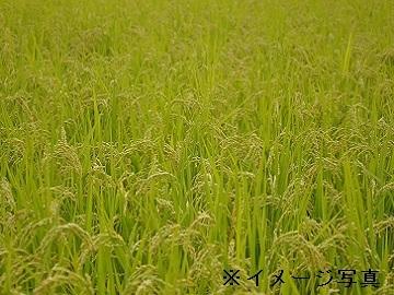 館山市×稲作×/法人【33005】-1