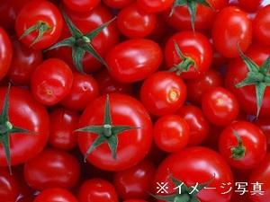 神奈川・静岡×施設野菜/法人【33003】-top
