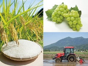 農業・食品産業技術総合研究機構-top