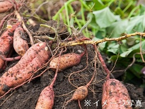 臼杵市×野菜/法人【33056】-top