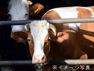 関東×酪農/法人【33096】-top