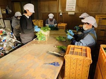岩槻野菜工房-4(2)