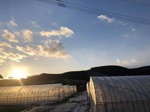 北見市×野菜/法人【33125】-top