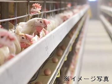 岐阜市×養鶏ヘルパー/法人【33130】-top