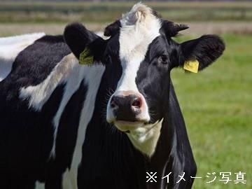 前橋市×酪農/個人【33148】