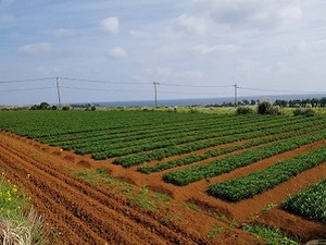村上農園-top