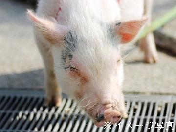 国見町×養豚/法人【33162】-top