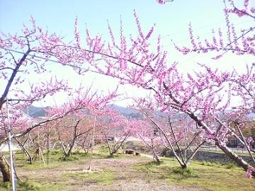 古屋農園 ヤマフル-top