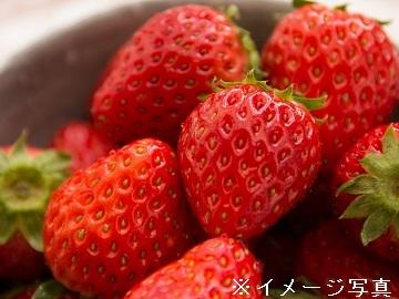 静岡市x施設野菜/法人【33190】-1