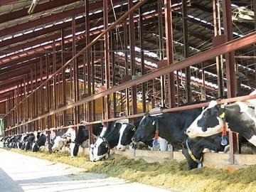 士幌町酪農ヘルパー有限責任事業組合-8