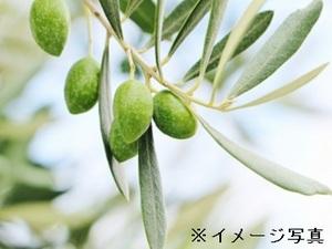 土庄町×販売促進/法人【33203】-top