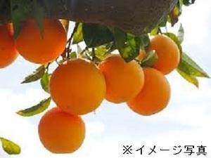 太良町×管理職候補/法人【33218】-top