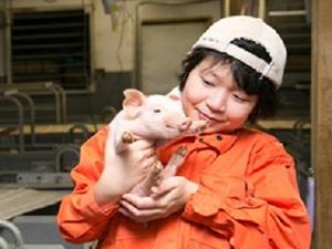 金山町×養豚/法人【33222】-top
